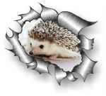 Ripped Torn Metal Design With Cute Hedgehog Motif External Vinyl Car Sticker 105x130mm